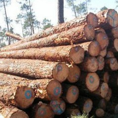 非洲原木及板材进口须知
