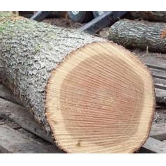 木材的识别方法之一篇